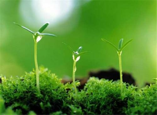 第三批植物提取物国际商务标准面世